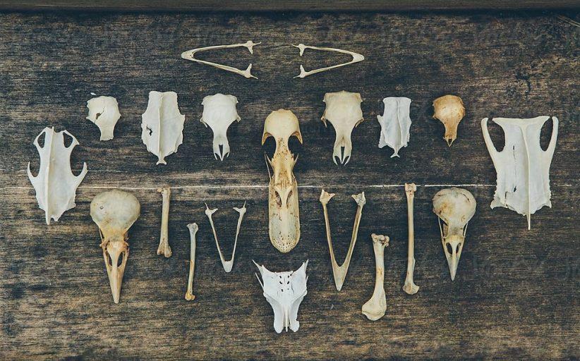 পশুর উচ্ছিষ্টাংশ রফতানিতে ১০ শতাংশ নগদ সহায়তা