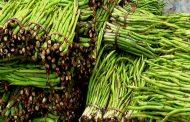 ইউরোপ-আমেরিকায় রফতানি হচ্ছে কুমিল্লার কচুর লতি